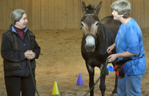 Clinic Fun: Let the Equines Watch While the Humans Learn