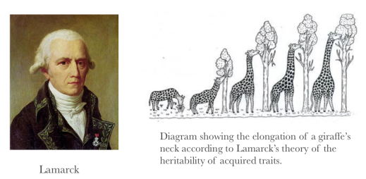 Lamarck and his giraffes