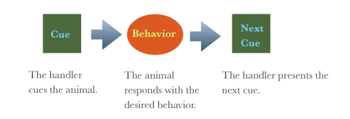 cue behavior cue graphic