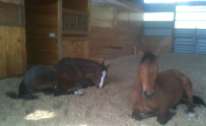 Peregrine and Robin asleep in arena