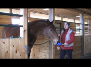 With the horses we begin with very simple, easily isolated behaviors such as targeting.
