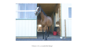 Indy 34 Choice Pg by door
