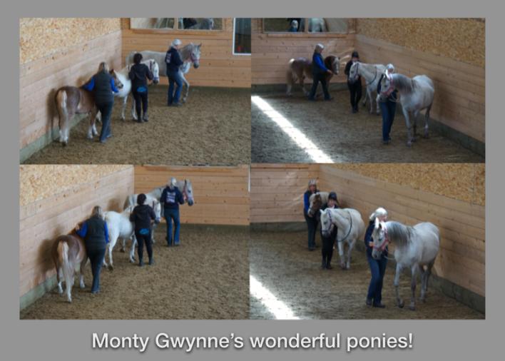 drill team Monty's ponies