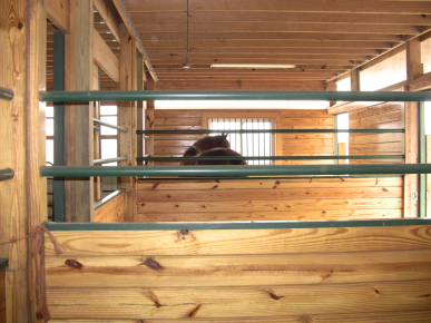 Robin in stall long view