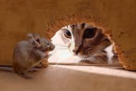 cat outside mouse hole