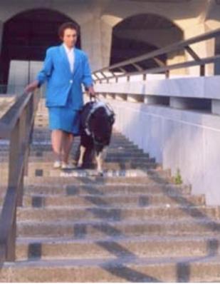 Panda descending museum stairs