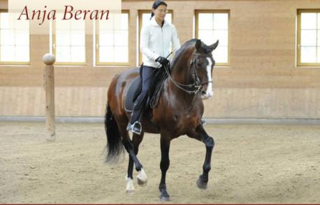 Anja Beran passgae bay horse at 1.09.16 PM