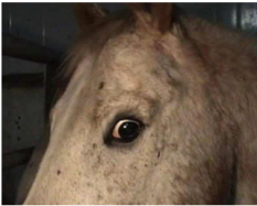frightened-horse-close-up
