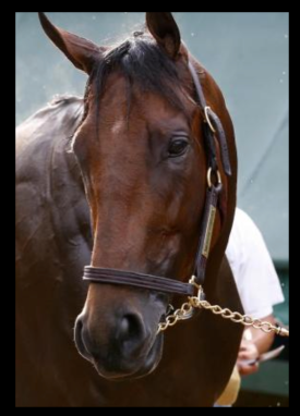 American pharoah lip chain