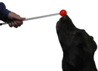 dog touching a target