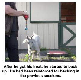 Goat diaries Day 2 backing up.png