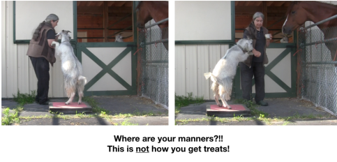 Goat Diaries Day 2: Excitement - 2 photos where manners?.png