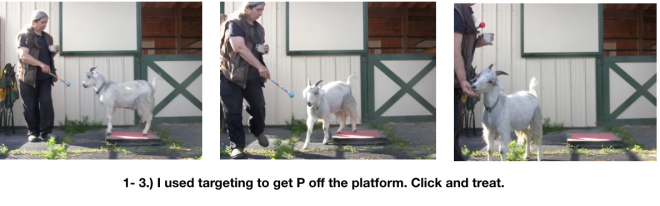 Goat Diaries Day 2 Platforms 3 photos targeting.png