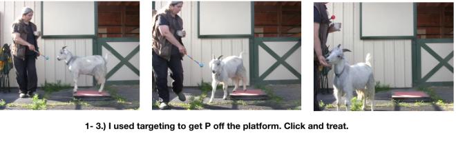 Goat Diaries Day 2 Platforms 3 photos targeting.png