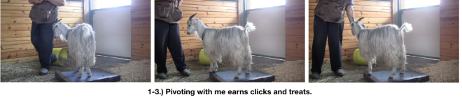 Goat Diaries Day 3 E Pivoting with me.png