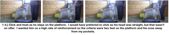 Goat Diaries Day 3 E's First Platform Session - Worried -staying 4 photos.png