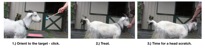 Goat Diaries: Day 3 Platforms Pt 2 - head scratch 3 photos.png