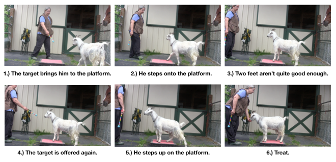 Goat Diaries: Day 3 Platforms Pt 2 - targeting to platform.png