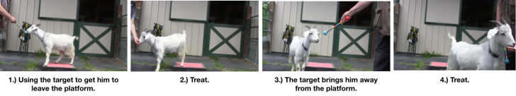 Goat Diaries: Day 3 Platforms Pt 3 - targeting off platform 4 photos.png