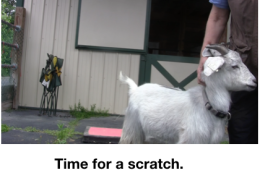 Goat Diaries: Day 3 Platforms Pt 3 - time for a scratch.png
