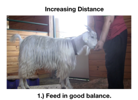 Goat Diaries Day 4 - E on 2 platforms - pt. 2 - panel 6.png