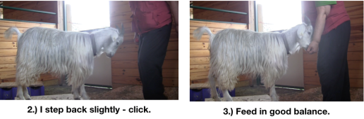 Goat Diaries Day 4 - E on 2 platforms - pt. 2 - panel 7.png