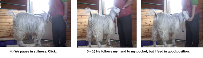 Goat Diaries Day 4 E's session 2 platforms in stall 1 - Panel 2.png