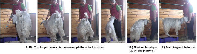 Goat Diaries Day 4 E's session 2 platforms in stall 1 - Panel 3.png