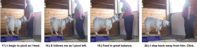 Goat Diaries Day 4 E's session 2 platforms in stall 1 - Panel 5.png