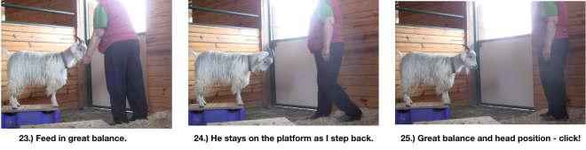 Goat Diaries Day 4 E's session 2 platforms in stall 1 - Panel 7.png