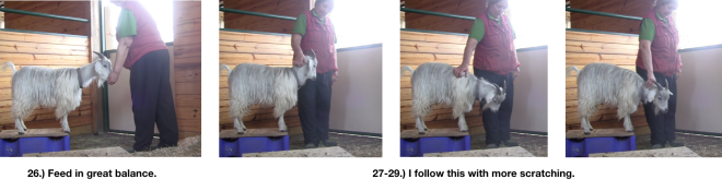 Goat Diaries Day 4 E's session 2 platforms in stall 1 - Panel 8.png