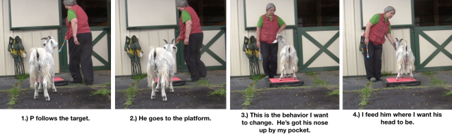 Goat Diaries Day 4 - P - Platforms Pt 1 - panels 1-4.png
