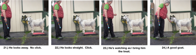 Goat Diaries Day 4 - P - Platforms Pt 1 - panels 21-24.png