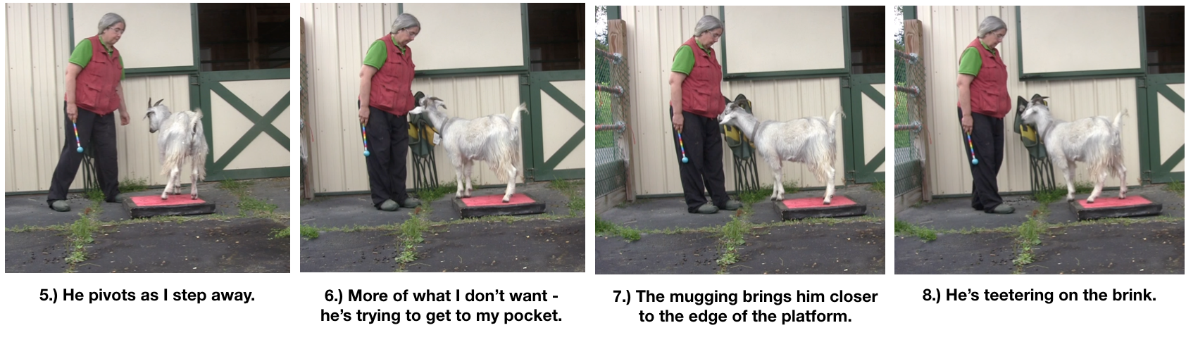 Goat Diaries Day 4 - P - Platforms Pt 1 - panels 5-8.png