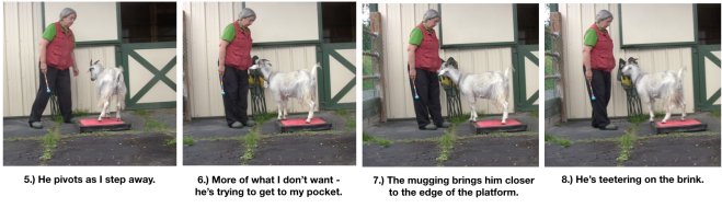 Goat Diaries Day 4 - P - Platforms Pt 1 - panels 5-8.png