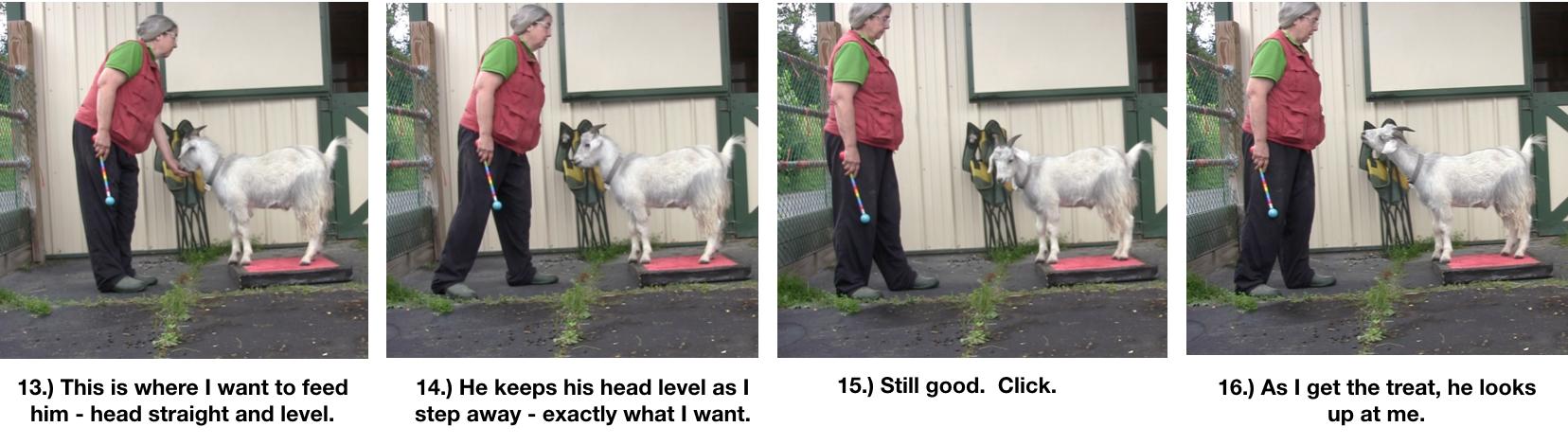 Goat Diaries Day 4 - P - Platforms Pt 1 - ppanels 13-16.png