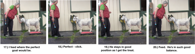 Goat Diaries Day 4 - P - Platforms Pt 1 - PPanels 17-20.png