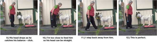 Goat Diaries Day 4 - P - Platforms Pt 1 - ppanels 9-12.png