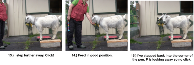 Goat Diaries Day 4 Two Platforms Pt 2 What a Nimble Goat -panels 13-15.png