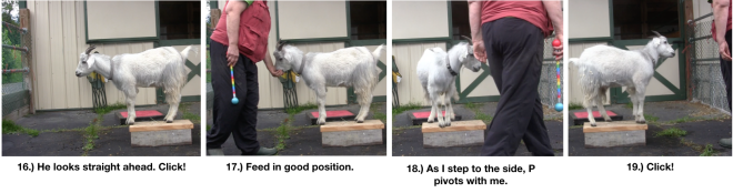 Goat Diaries Day 4 Two Platforms Pt 2 What a Nimble Goat -panels 16-20.png