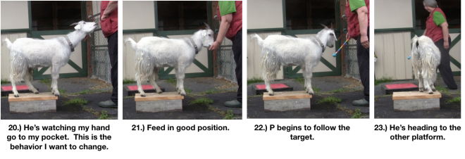 Goat Diaries Day 4 Two Platforms Pt 2 What a Nimble Goat -panels 20-24.png