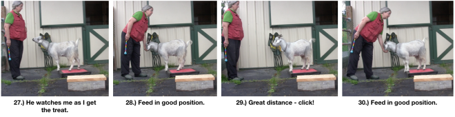 Goat Diaries Day 4 Two Platforms Pt 2 What a Nimble Goat - panels 26-30.png