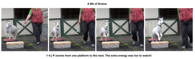 Goat Diaries Day 4 Two platforms Pt 3 - A Less Than Perfect Goat - panel 5.png