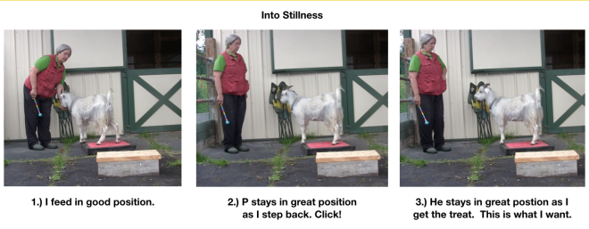 Goat Diaries Day 4  Two platforms Pt 5 Lots of energy into stillness - into stillness.png