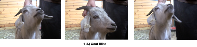 Goat Diaries E's Day 3 1st Platform Session - Begin With Bliss - Goat bliss 3 photos.png