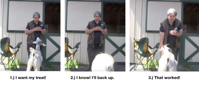Goats Day 2 Backing Confirmed P 3 photos.png