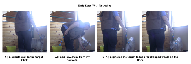 Early days with targeting panel 1.png