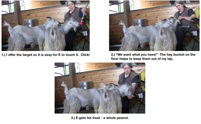 Goat Diaries Day 1 targeting panel 1a