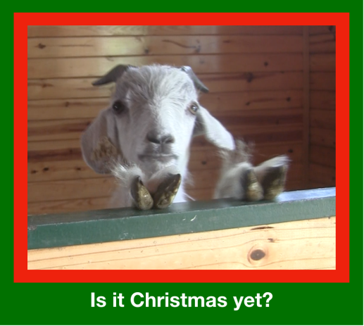 Elyan - Is it Christmas yet?.png