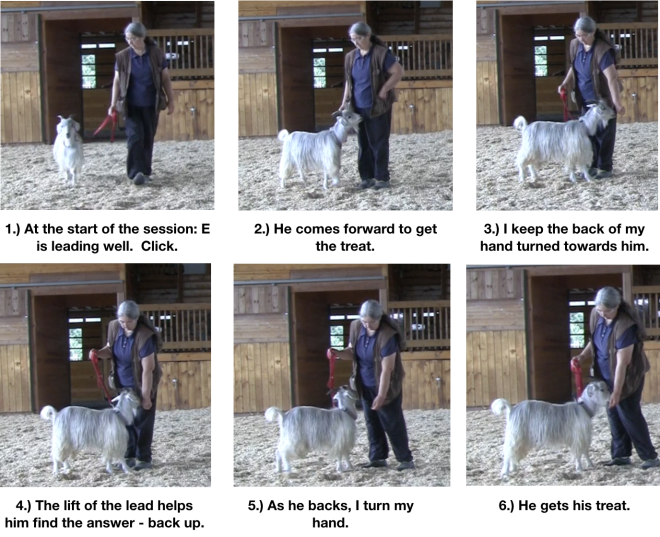Goat diaries Day 10 food manners 1.png